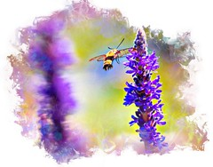 lake katherine. 2018 (timp37) Tags: photolab hummingbird moth lake katherine illinois 2018