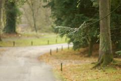 """The Road Not Taken"" (Elisafox22) Tags: elisafox22 sony a58 meyeroptik lens meyeroptikorestor bokehmonster 135mmf28 15blade vintagelens leaves autumncolours golden colours trees pinetrees road robertfrost sunlight elisaliddell©2018"