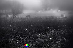 Rotoloni nella nebbia (Gianni Armano) Tags: rotoloni nella nebbia valle san bartolomeo alessandria piemonte italia foto gianni armano photo flickr