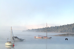 good morning alqueva (lualba) Tags: alqueva lake see wasser water boats boote morgen morning bird vogel alentejo portugal