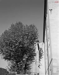 Tree meets Building (fs999) Tags: fs999 fschneider aficionados zinzins plaubel makina 67 plaubelmakina67 6x7 film camera filmcamera 60x70 ashotadayorso topqualityimage topqualityimageonly artcafe pentaxart corel paintshoppro paintshoppro2019ultimate 2019ultimate nikkor12880mm nikon nikkor 128 80mm 8028 aiguesmortes gard provence france rollei retro 100 retro100 rolleiretro100 r100 100iso blackwhite blackandwhite bw noirblanc noiretblanc nb blackwhitephotos caffenol clcs cold start stand home development plustek opticfilm 120 scanner 2400dpi silverfast ai studio