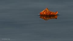 Feuille d'automne sur le lac (christian.rey) Tags: cheyres cantondefribourg suisse ch feuille automne lac minimalisme cvce minimalist nature eau sony alpha a7r2 a7rii 70200