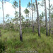 2011-12-31 TEC-0058 Lowland Pine Savanna - E.P. Mallory