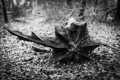 IMG_3056 (Marklucylockett) Tags: 2018 canon7d dartmoor dartmoornationalpark december devon marklucylockett river riverdart uk