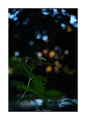 2018/11/24 - 16/18 photo by shin ikegami. - SONY ILCE‑7M2 / Lomography New Jupiter 3+ 1.5/50 L39/M (shin ikegami) Tags: sky 空 紫陽花 flower 花 井の頭公園 吉祥寺 autumn 秋 sony ilce7m2 sonyilce7m2 a7ii 50mm lomography lomoartlens newjupiter3 tokyo sonycamera photo photographer 単焦点 iso800 ndfilter light shadow 自然 nature 玉ボケ bokeh depthoffield naturephotography art photography japan earth asia