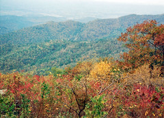 19931001 2 Fall (Wes Albers + Becky Albers) Tags: season autumnfall park nationalpark shenandoahnationalpark skylinedrive usa virginia