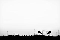 Stork skyline (jaume zamorano) Tags: blackandwhite blancoynegro blackwhite blackandwhitephotography blackandwhitephoto bw catalunya d5500 lleida monochrome monocromo nikon noiretblanc nikonistas sky skyline stork street streetphotography streetphoto streetphotoblackandwhite urban urbana pov