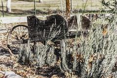 Borrow A Wheel (p) (davidseibold) Tags: america california fence jfflickr leaf painting photosbydavid plant postedonello postedonflickr redding rock shastacounty unitedstates usa wheelbarrow yardart
