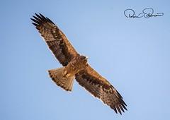 IMG-20180404-WA0003 (TARIQ HAMEED SULEMANI) Tags: sulemani tariq tourism trekking tariqhameedsulemani winter wildlife wild birds nature nikon