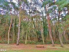 repos nature (dr o_o) Tags: forest bench wood trees nature forêt arbres bois banc repos