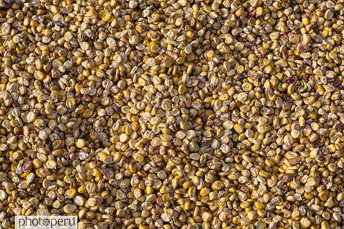 maíz para chica