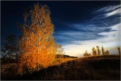 Birke am Hang (linke64) Tags: thüringen deutschland germany landschaft laub blätter natur himmel herbst wolken wiese gras gegenlicht bäume baum birke hang schatten licht rahmen