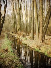 walking (Darek Drapala) Tags: walking forest trees reflection reflects olszynka nature autumn winter panasonic poland polska panasonicg5 lumix light