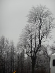 DSCN5350 (tombrewster6154) Tags: icy barren trees winter storm 2019 midjanuary day number 13 westover church parking lot sunday afternoon partial view white bus yellow pedestrian crossing sign flashing light powerlines glazed over branches grey sky digital camera photograph