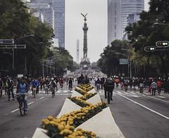 Paseo de la Reforma (samleer) Tags: mexico mexicocity autumn daytime reformer people bikes skates road