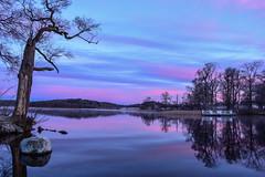 Ambient Glow (Fredrik Lindedal) Tags: tree trees water lake landscape glow morning morninglight moody reflection reflections sweden sverige nääs nature iamnikon