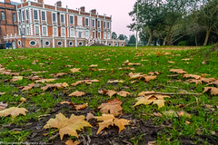 Croxteth Country Park Liverpool (Phil Longfoot Photography) Tags: park parks country countryside countrypark mansion autumn autumnal trees tree horses horse liverpool