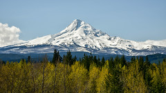 Mount Hood, Oregon (maytag97) Tags: maytag97 nikon d750 mt mount hood oregon widescreen pano panorama blue sky cloud tree cascade mountain range spring season white view nature ski travel landscape scenic northwest beauty usa outdoors tourism snow recreation trees majestic pacific beautiful slopes outdoor clean explore forest mountainside river area