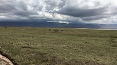 Game Drive, Video (Everyday Glory!!!) Tags: ngorongorocrater ngorongoro africa tanzania wildlife gamedrive safari lakemagadi