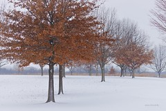 Fall into Winter (Anton Shomali - Thank you for over 2 million views) Tags: beauty beautiful photography photo picture sony camera sonycamera winter2019 nature color colours fallcolors 2019 january snow fall winter fallintowinter januarysnow perryfarm bradley illinois us usa america tree trees season ice wind cold white leaves kankakee kankakeecounty park state