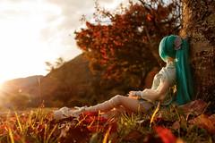 autumn drop day (NOZOMUN_SHBVD) Tags: 80d sigma30mmf14dc toys jfigure bfigure volks dollfiedream hatsunemiku ookuwa dd初音ミク ドルフィードリーム 初音ミク 大桑村 夕景