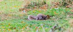 Marsh Lane Nature Reserve 3rd November 2018 (boddle (Steve Hart)) Tags: stevestevenhartcoventryunitedkingdomcanon5d4 marsh lane nature reserve 3rd november 2018 solihull england unitedkingdom gb steve hart boddle steven bruce wyke road wyken coventry united kingdon great britain canon 5d mk4 6d 100400mm is usm ii wild wilds wildlife life natural bird birds flowers flower fungii fungus insect insects spiders butterfly moth butterflies moths creepy crawley winter spring summer autumn seasons sunset weather sun sky cloud clouds panoramic landscape