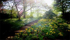 Spring Vibes (farmspeedracer) Tags: nature garden park 2018 april flower yellow gelb amarillo stairs staircase tree light reflection germany green sun ray vibe spring