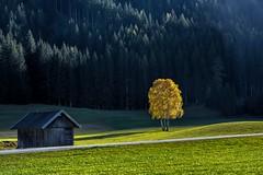 Illuminata (giannipiras555) Tags: sole natura autunno verde casa bosco trentino braies colori