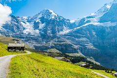 Wengernalp (olle.graf) Tags: 2018 olle berneroberland d3300 nikon schweiz september wengen switzerland eis ice jungfrau jungfraujoch mönch schnee snow lauterbrunnen bern