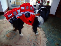 Fire and Rescue Dog (ASHA THE BORDER COLLiE) Tags: funny dog picture fire rescue costume quote ashathestarofcountydown connie kells county down photography
