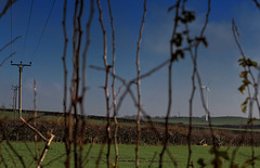 Through the Hedge (Malc '64') Tags: yorkshire flushdyke ossett westyorkshire branches grass green bluesky cables hedge fields poles renewableenergy windturbine powerlines