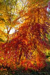 Fall Colors  in Seattle (pankaj.anand) Tags: fallcolors falls colors seattle washington wa usa blue yellow red canon canon60d canonphotography canontosony