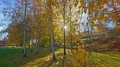 Autumn Sun (amberserg) Tags: sony sweden autumn xperiax stockholm