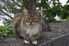 F014035_02 (fotoliber) Tags: nantes paysdelaloire france chat gat gato cat