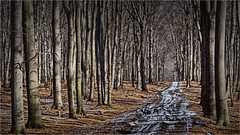 Landscape ... (lucjanglo) Tags: poland europe nature landscape silesia tree