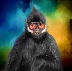 Painted Monkey (Wes Iversen) Tags: chicago francoislangur françoisleafmonkey hss illinois lincolnpark lincolnparkzoo nikkor70300mm sliderssunday tonkinleafmonkey animals apes mammal monkeys texture whitesideburnedblacklangur zoos
