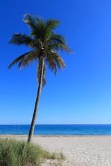 Un palmier, la plage, la mer, un ciel bleu, ca fait l'image (Michel et Micheline) Tags: florida floride beach plage soleil ciel chaleur sable fortlauderdale palmier mer ocean