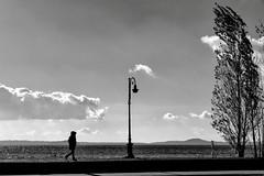 Il lago, d'inverno (Gaia Rampon) Tags: thelakeinwintertime illagod'inverno noiretblanc blackandwhite windblowing solitude wintertime winter landscape lake absoluteblackandwhite