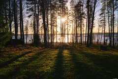 Long shadows (Rico the noob) Tags: 2018 50mmf12 d850 landscape nature water outdoor lake sun mf sunrise tree travel published horizon manualfocus sky grass 50mm dof trees finland