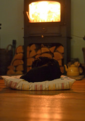 lay right down in her favourite place (conall..) Tags: dory dog jack russel terrier nikon afs nikkor f18g lens 50mm prime primelens nikonafsnikkorf18g home sunroom clearview wood burn stove cushion floor wooden night winter warm warming flames