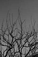 DSC02877-2 (Zengame) Tags: kameidotenjin rx rx1 rx1r sonydscrx1rsonnart235 sonnart235 sony zeiss japan kameido ソニー ツアイス 亀戸 亀戸天神 日本 東京都 jp