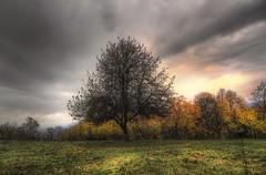 A tree (celestino2011) Tags: alberi nuvole prato paesaggio natureinfocusgroup