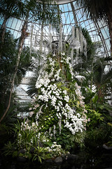 (A Cromwell) Tags: nybg botanicalgardens garden orchid orchidshow orchidshow2019 white whiteflowers