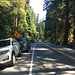 Public invited to help improve access to Cathedral Grove