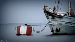 Rara Avis ship in l'Aberwrac'h harbour (patrick_milan) Tags: rara avis aberwrach finistere bretagne mer sea water red ship tall tallship buoy buoyant