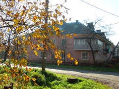 tree & house (cloversun19) Tags: gold rain animal field grass landscape branches leafs foliage sky russia russian spb tree walking country holiday holidays park garden dream dreams positive forest happy view grey legend fairytale fir firtree birch village evening romantic october september car road street blue maple leaves town city light sun yellow autumn trees