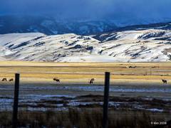 National Elk Refuge (nousku) Tags: tya animals wyoming jacksonhole winter landscape lumix
