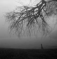 In a Cemetery, Portland (austin granger) Tags: portland oregon cemetery tree branches correspondence grave death headstone square fog film gf670