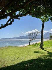 Brave little tree (kimbar/Thanks for 4 million views!) Tags: hawaii oahu ocean park sea pacificocean kualoaregionalpark