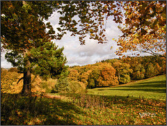 The Autumn Collection.. (Picture post.) Tags: landscape nature green autumn trees shadows leaves clouds sunlight fields paysage arbre